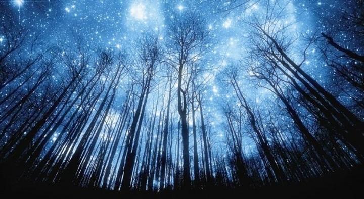 Stelle alberi luci
