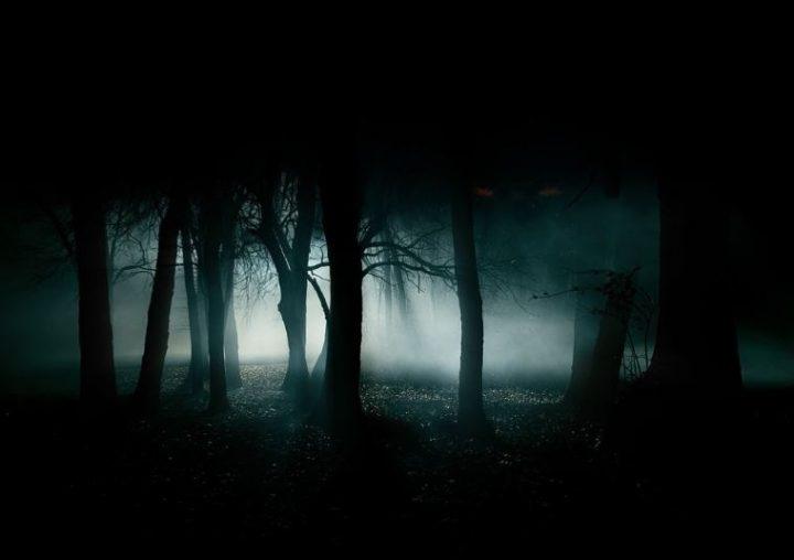 notte-nel-bosco-occhi